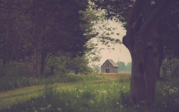 Фото обои сарай, деревья, трава, поле, путь, ферма, цветы