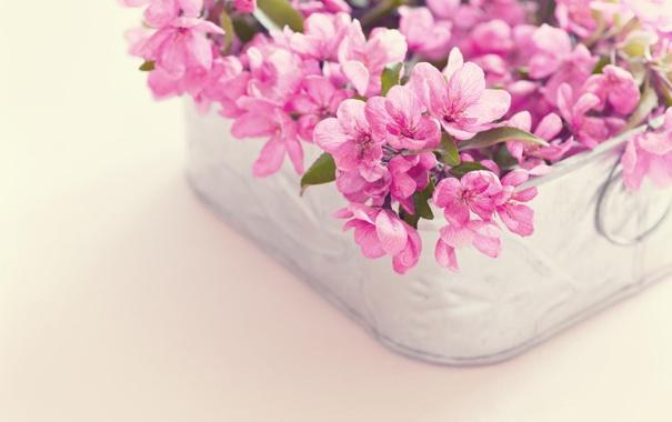 Фото обои цветы, корзина, букет, розовые