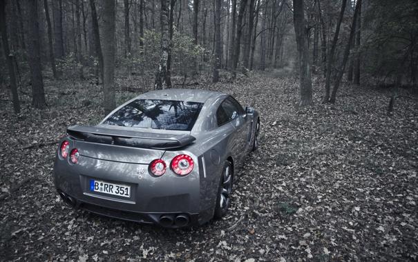 Фото обои лес, деревья, природа, листва, бездорожье, cars, auto