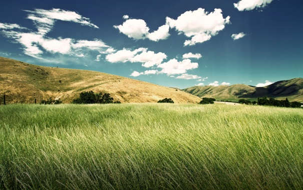 Фото обои небо, трава, облака, пейзаж, холмы, луг, колосья