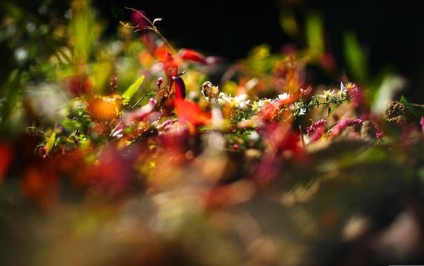 Фото обои макро, лучи, свет, цветы, природа, фото, фон