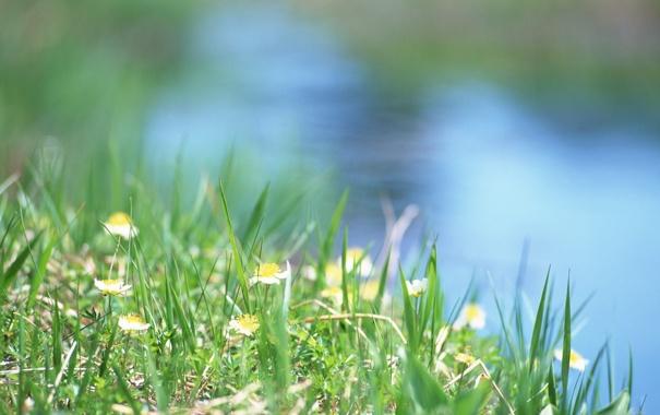 Фото обои трава, солнце, лето, ручей, вода, тепло