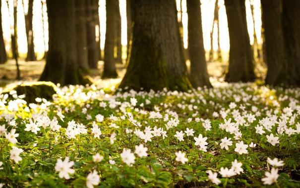Фото обои лес, лето, листья, солнце, деревья, цветы, природа