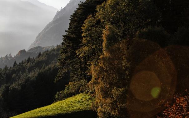 Фото обои небо, деревья, фото, пейзажи, обои на рабочий стол, hd wallpapers