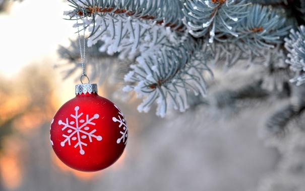 Фото обои зима, снег, ветки, красный, природа, игрушка, шар