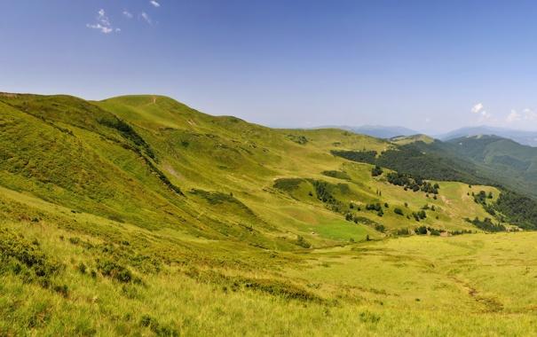 Фото обои трава, пейзаж, горы, природа, Украина, Карпаты