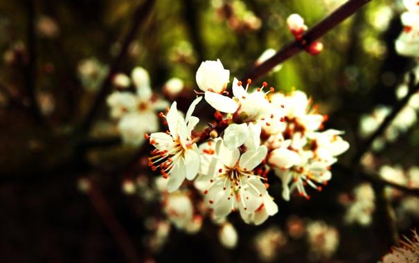 Фото обои цвет, Весна, сад