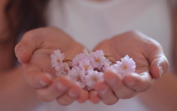 Фото обои цветы, фон, розовый, нежный, обои, руки, цветочки
