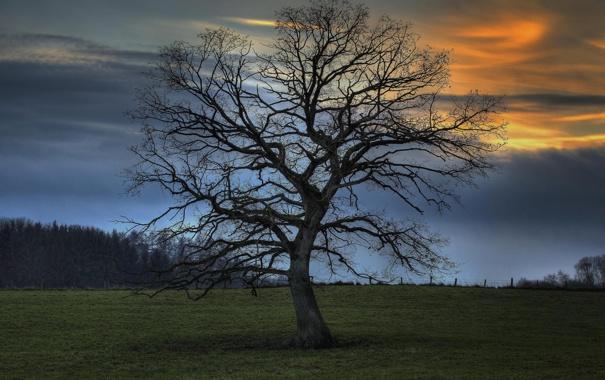 Фото обои поле, трава, деревья, ночь, природа, дерево, поля