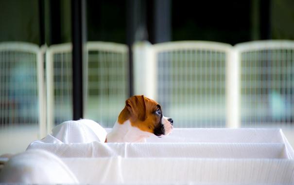 Фото обои друг, щенок, взгляд, собака