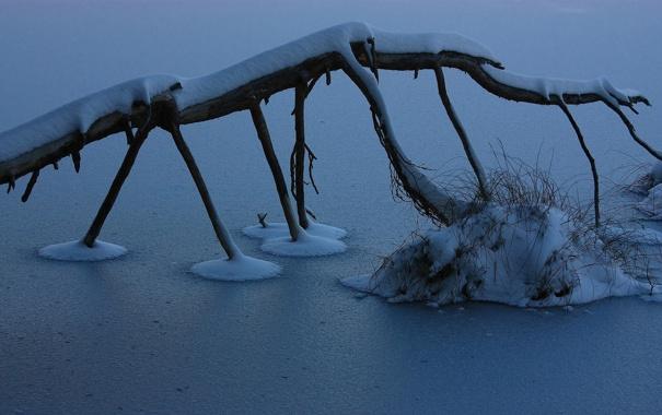 Фото обои ice, winter, lake, branch