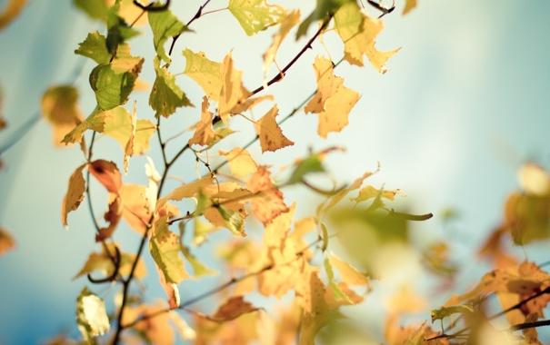Фото обои осень, листья, солнце, макро, лучи, деревья, ветки