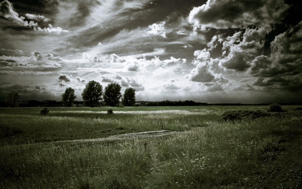Фото обои дорога, поле, небо, облака, деревья, пейзаж, природа