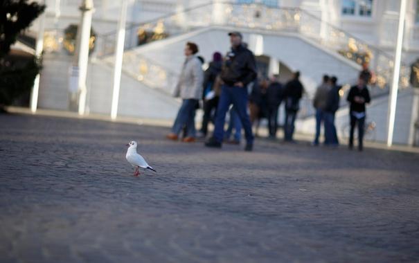 Фото обои город, птица, улица