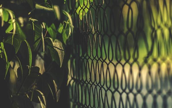 Фото обои листья, забор, куст, ограда, зеленые