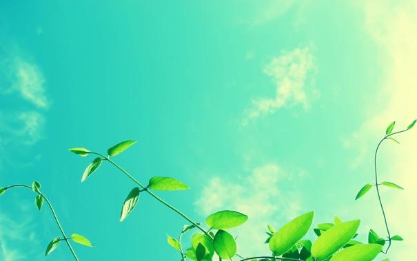 Фото обои Листья, Солнце, Зелень, Лучи, Макро, Облака, Небо