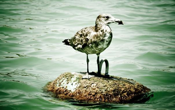 Фото обои животные, вода, птица