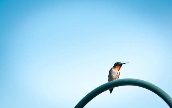 Фото обои небо, фон, птица