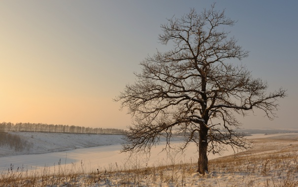 Фото обои зима, поле, снег, дерево