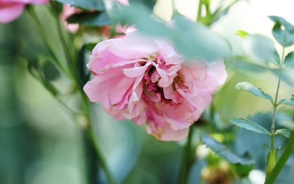 Фото обои лето, цветы, природа, растения