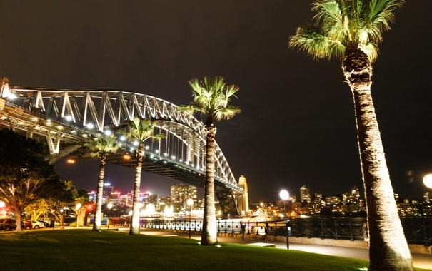 Фото обои ночь, мост, огни, пальма, Австралия, Сидней