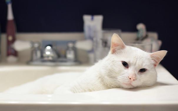 Фото обои кот, cat, kitty, кошка