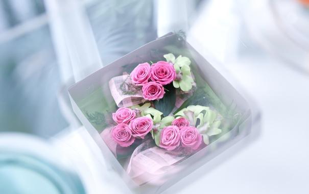 Фото обои белый, цветы, розовый