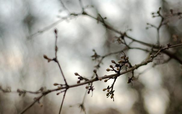 Фото обои осень, дерево, ветка, размытость, почки