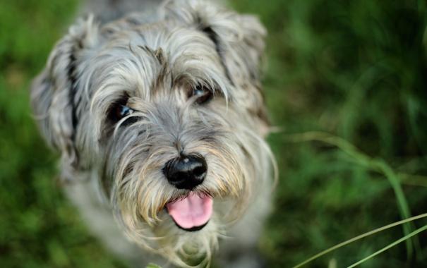 Фото обои язык, друг, собака, пёс
