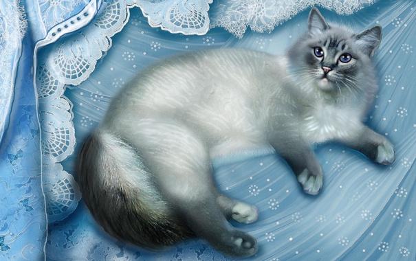 Фото обои кошка, ткань, лежит, серая, голубая