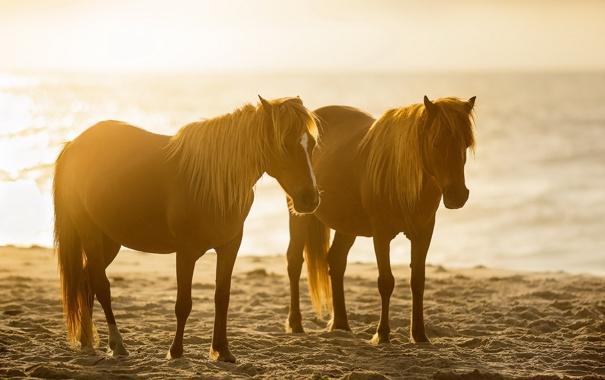 Картинки коней на природе
