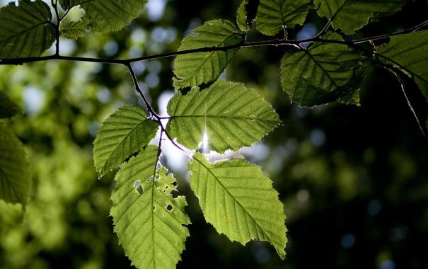 Фото обои листья, макро, природа, фото, обои