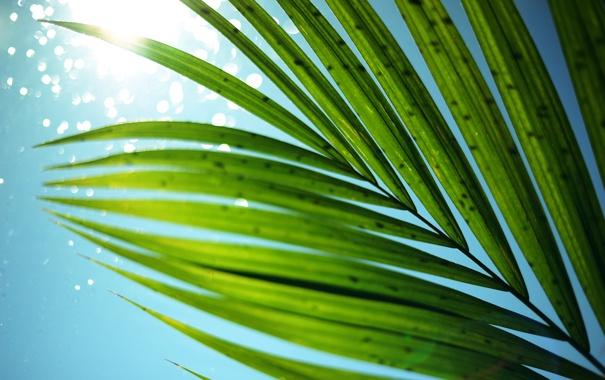 Фото обои лето, небо, листья, солнце, пальма