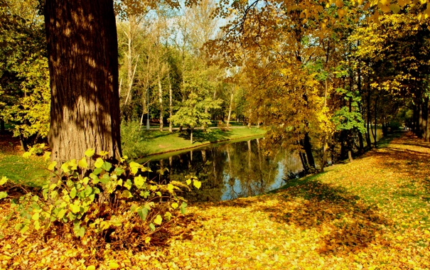 Фото обои осень, листья, вода, солнце, деревья, парк, отражение