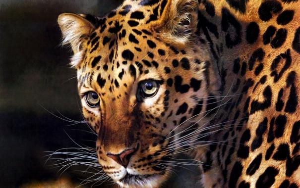 Фото обои хищник, арт, леопард, Carl Brenders
