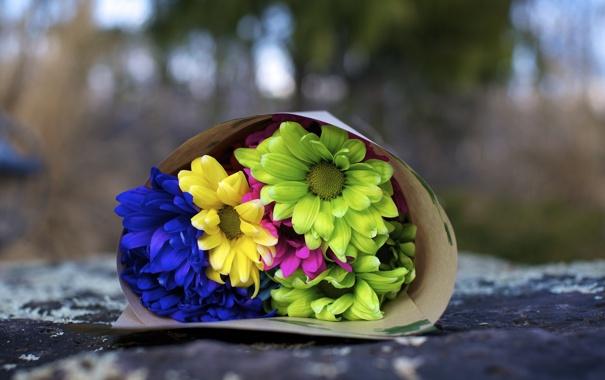 Фото обои цветы, синий, желтый, зеленый, фон, розовый, widescreen