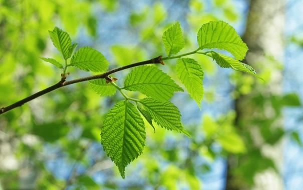 Фото обои зелень, листья, деревья, дерево, листва