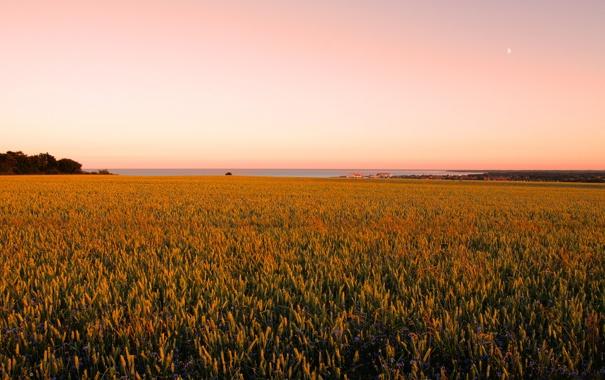 Фото обои поле, небо, фото, обои, пейзажи, поля
