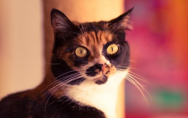 Фото обои глаза, кот, усы, взгляд, фон, кошак