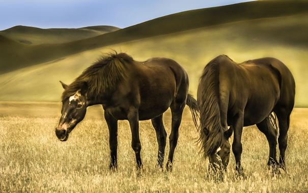 Фото обои трава, холмы, лошади, луг