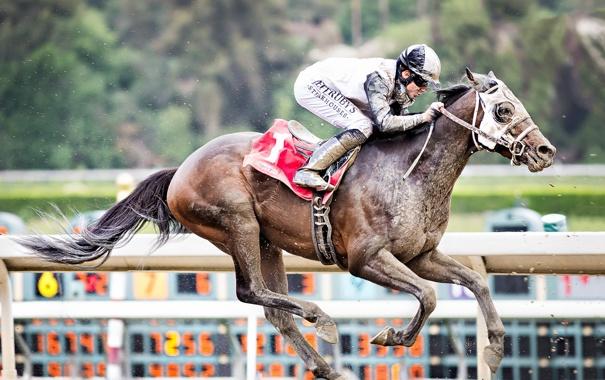 Фото обои конь, гонка, спорт, всадник