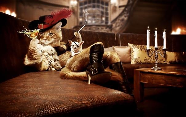 Фото обои диван, бокал, подушки, свечи, сигарета, собачка, кот в сапогах