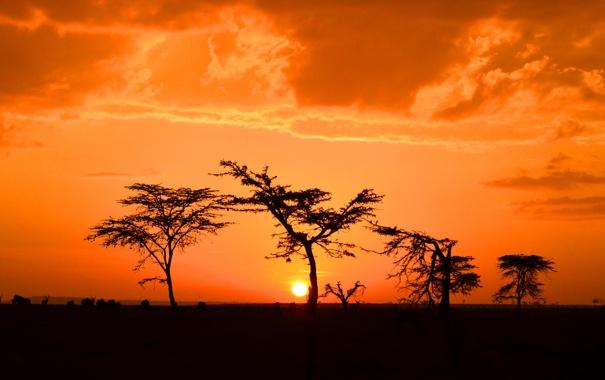 Фото обои небо, солнце, деревья, закат, горизонт, силуэт