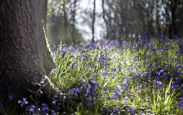 Фото обои цветы, природа, дерево