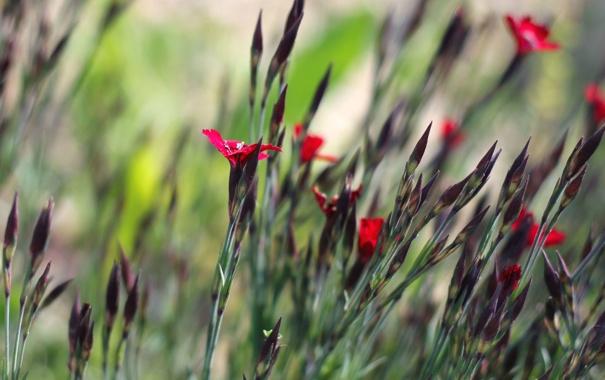 Фото обои цветы, лепестки, красные