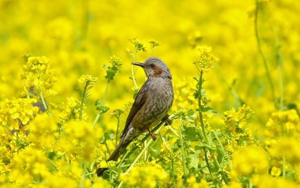 Фото обои лето, трава, природа, птица, цветение, бюль бюль