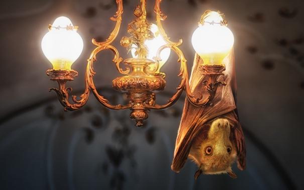 Фото обои свет, лампы, люстра, летучая мышь