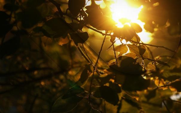 Фото обои свет, листва, Golden shine