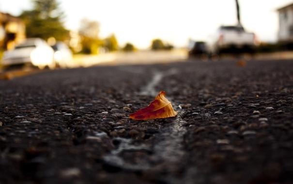 Фото обои асфальт, макро, лист, дорога, размытость