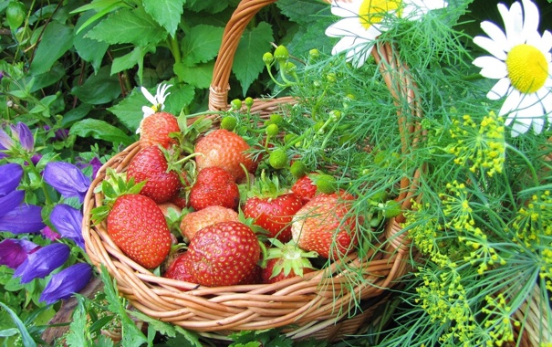 Фото обои цветы, ягоды, ромашки, клубника, корзинка